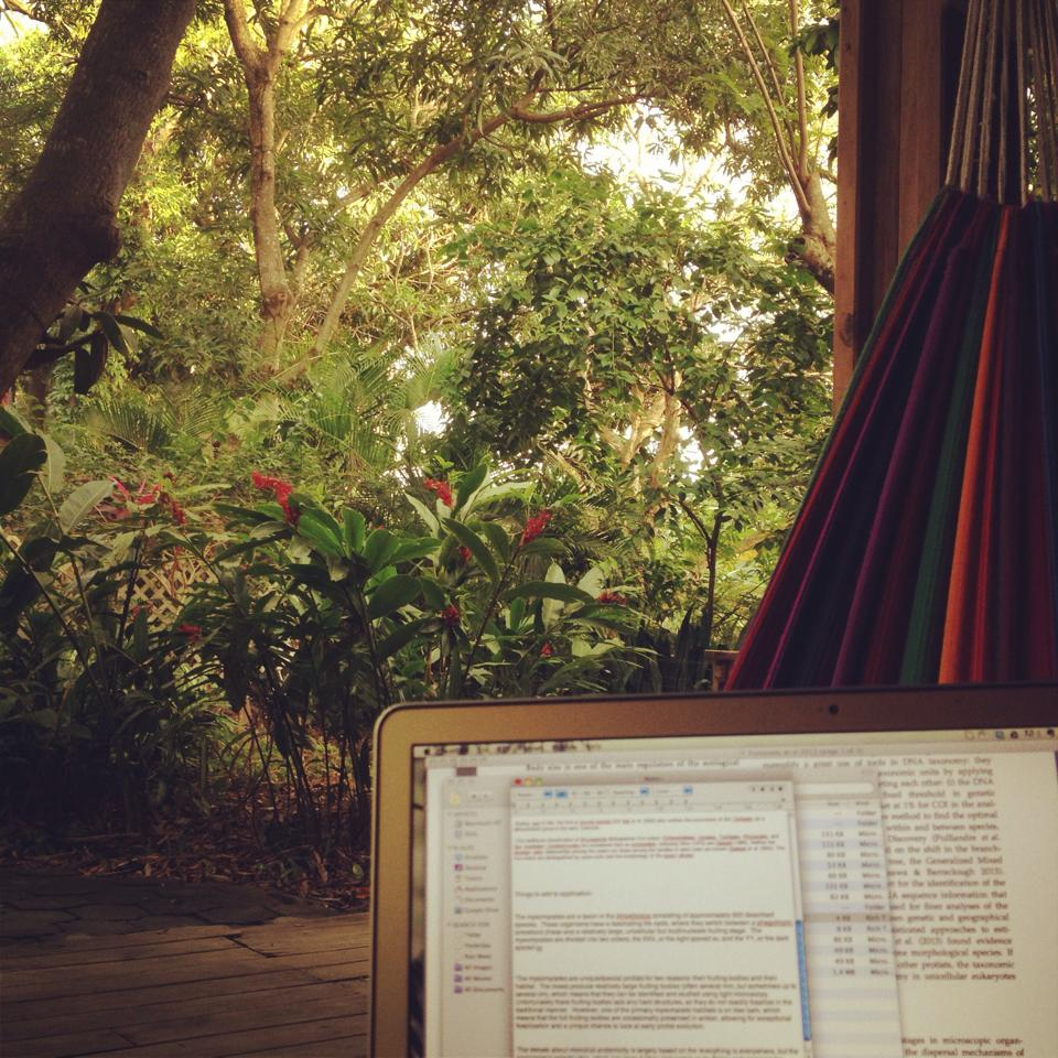My last happy memories of my computer: working from the hammock at a guest house on Roatan, Honduras.