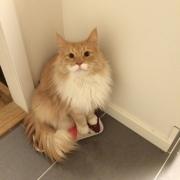 Mom - where's my breakfast?!