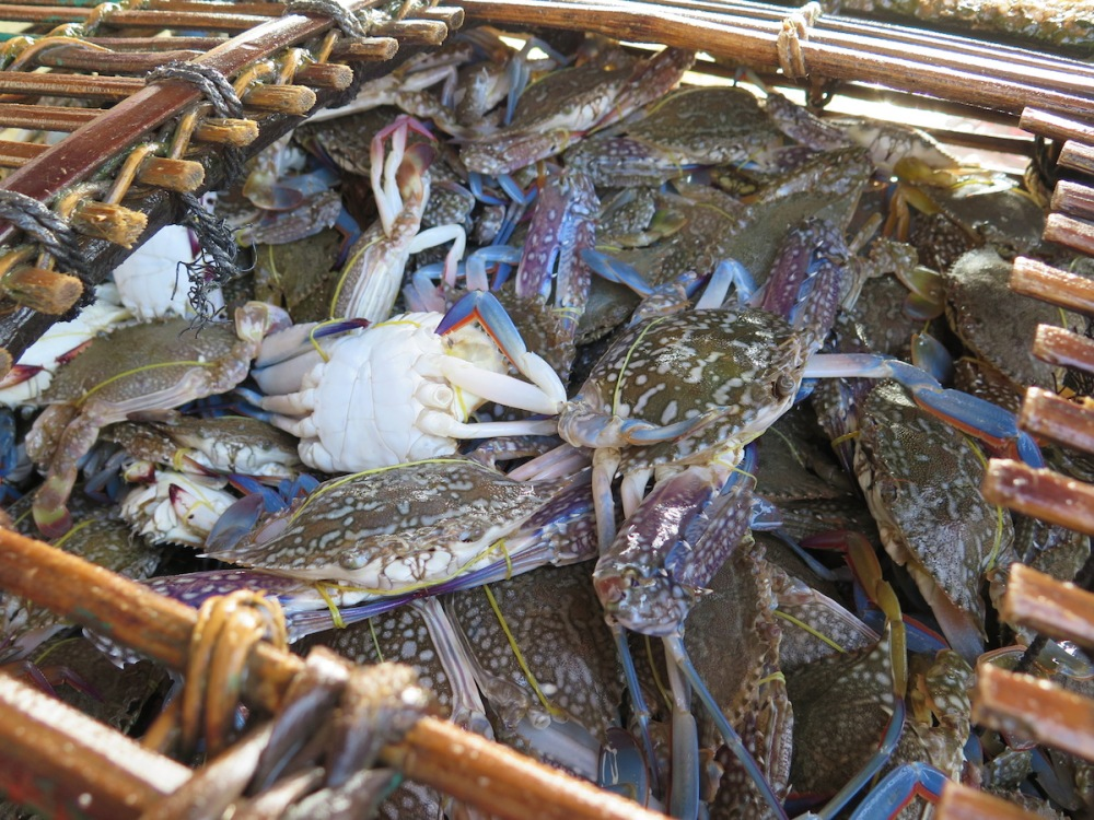 Crabs in Kep