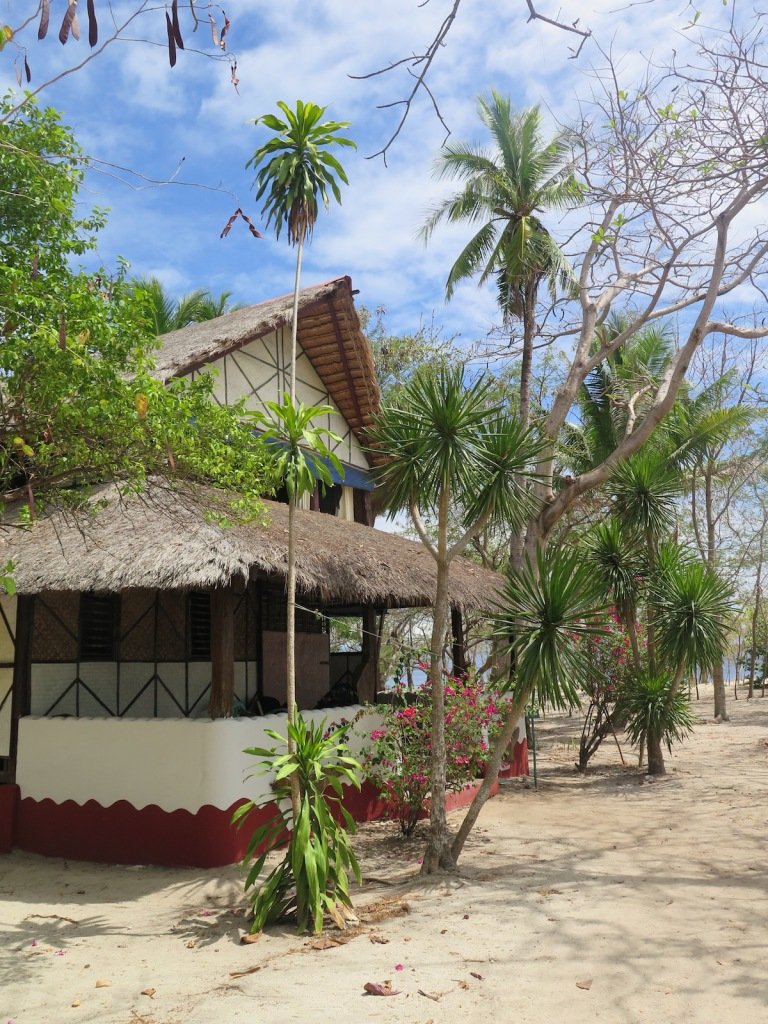 Dr Seuss trees Pandan Island screw palms
