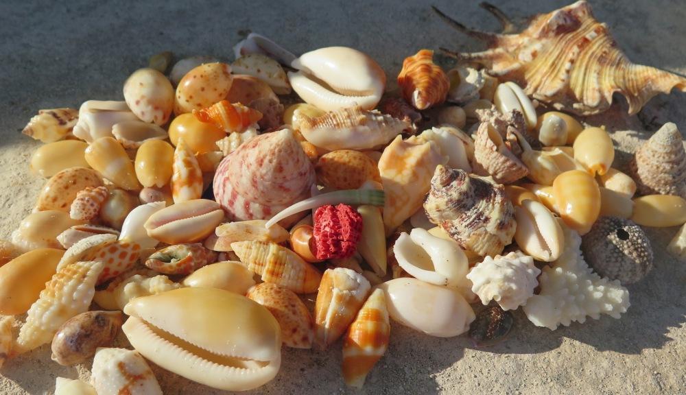Gastropods beach-combing bounty