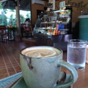 chiang rai coffee