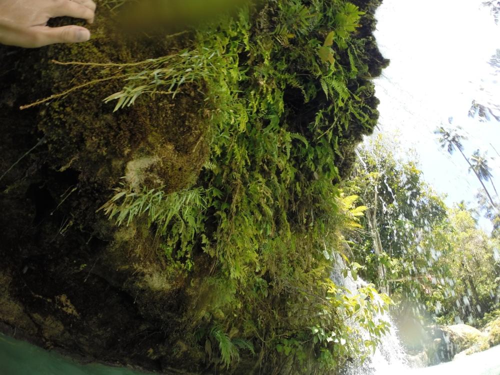 Lazi waterfalls and some ferns