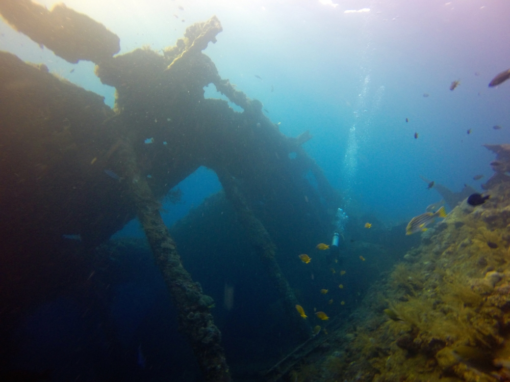 After admiring the parrotfish and the garden eels we had a look around the wreck itself