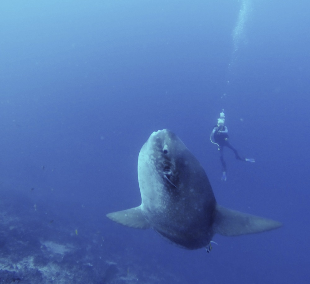 If you're the first one to spot a mola you get to see this!
