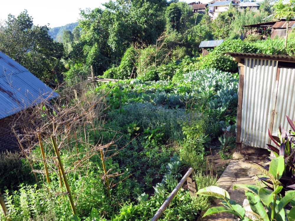 Our Thansant home stay outhouse (right) and part of the *ahem* well-fertilized garden